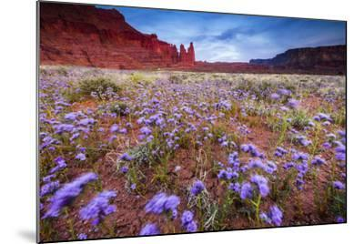 Purple Flowers Bloom, Early Spring, The Desert Eco-System Surrounding Fisher Towers Near Moab, Utah-Jay Goodrich-Mounted Photographic Print