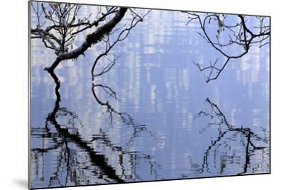 Big Leaf Maple Branches Touch The Waters Of Lake Crescent In Olympic National Park In Washington-Jay Goodrich-Mounted Photographic Print