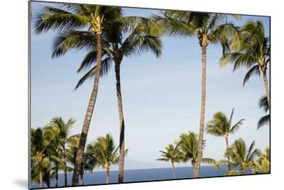 Wailea Beach Marriott Resort And Spa, Maui, Hawaii, USA: Palm Trees At The Resort-Axel Brunst-Mounted Photographic Print