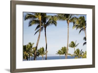 Wailea Beach Marriott Resort And Spa, Maui, Hawaii, USA: Palm Trees At The Resort-Axel Brunst-Framed Photographic Print