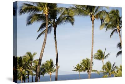Wailea Beach Marriott Resort And Spa, Maui, Hawaii, USA: Palm Trees At The Resort-Axel Brunst-Stretched Canvas Print