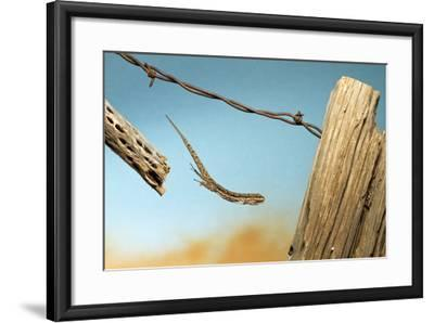 A Lizard Jumping Off A Fence-Karine Aigner-Framed Photographic Print