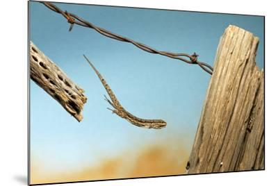 A Lizard Jumping Off A Fence-Karine Aigner-Mounted Photographic Print
