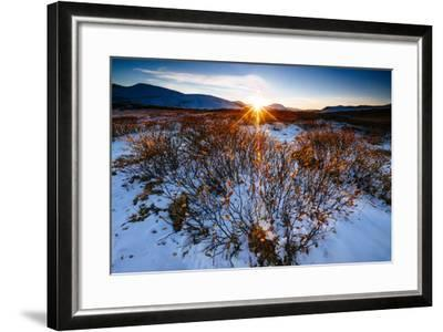Sun Sets Over Low Lying Shrubs, Summit Of Independence Pass Hwy 82 E Of Aspen, CO-Jay Goodrich-Framed Photographic Print