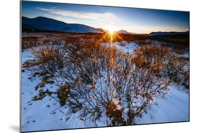 Sun Sets Over Low Lying Shrubs, Summit Of Independence Pass Hwy 82 E Of Aspen, CO-Jay Goodrich-Mounted Photographic Print