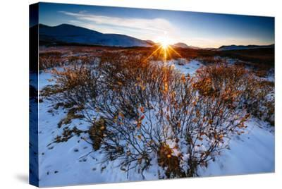 Sun Sets Over Low Lying Shrubs, Summit Of Independence Pass Hwy 82 E Of Aspen, CO-Jay Goodrich-Stretched Canvas Print