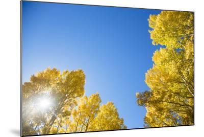 Telluride, Colorado-Justin Bailie-Mounted Photographic Print