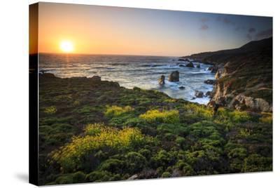 Cinquefoil Carpets The Coastline Near Monterey, California-Jay Goodrich-Stretched Canvas Print