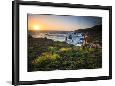 Cinquefoil Carpets The Coastline Near Monterey, California-Jay Goodrich-Framed Photographic Print