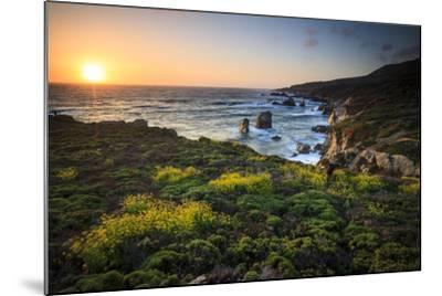 Cinquefoil Carpets The Coastline Near Monterey, California-Jay Goodrich-Mounted Photographic Print