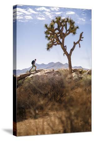 Joshua Tree National Park, California, USA: A Male Hiker Walking Along Behind A Joshua Tree-Axel Brunst-Stretched Canvas Print