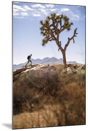 Joshua Tree National Park, California, USA: A Male Hiker Walking Along Behind A Joshua Tree-Axel Brunst-Mounted Photographic Print