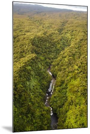 TNC Waikamoi Preserve, Maui, Hawaii, USA: Nature Conservancy's Waikamoi Preserve, From Helicopter-Axel Brunst-Mounted Photographic Print