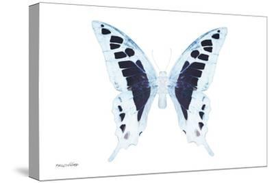 Miss Butterfly Cloanthus - X-Ray White Edition-Philippe Hugonnard-Stretched Canvas Print