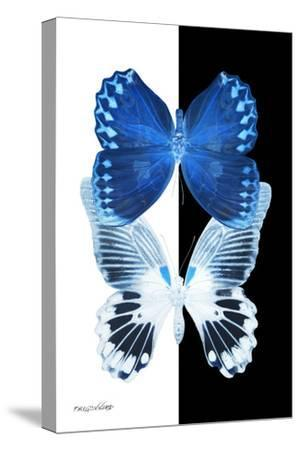 Miss Butterfly Duo Memhowqua II - X-Ray B&W Edition-Philippe Hugonnard-Stretched Canvas Print