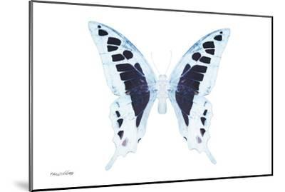 Miss Butterfly Cloanthus - X-Ray White Edition-Philippe Hugonnard-Mounted Photographic Print