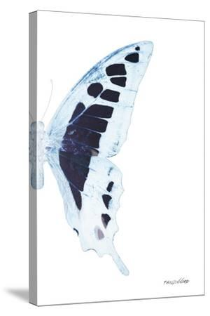 Miss Butterfly Cloanthus - X-Ray Right White Edition-Philippe Hugonnard-Stretched Canvas Print