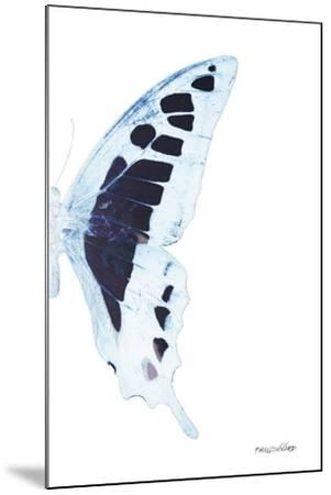Miss Butterfly Cloanthus - X-Ray Right White Edition-Philippe Hugonnard-Mounted Photographic Print