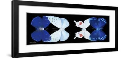 Miss Butterfly X-Ray Duo Black Pano VII-Philippe Hugonnard-Framed Photographic Print
