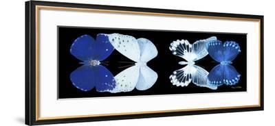 Miss Butterfly X-Ray Duo Black Pano XI-Philippe Hugonnard-Framed Photographic Print