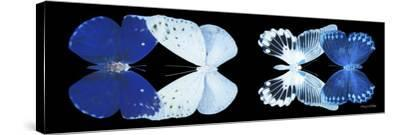 Miss Butterfly X-Ray Duo Black Pano XI-Philippe Hugonnard-Stretched Canvas Print