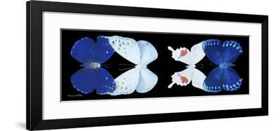 Miss Butterfly X-Ray Duo Black Pano XII-Philippe Hugonnard-Framed Photographic Print