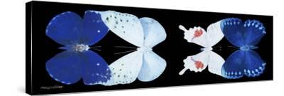 Miss Butterfly X-Ray Duo Black Pano XII-Philippe Hugonnard-Stretched Canvas Print