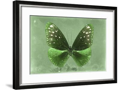 Miss Butterfly Euploea - Green-Philippe Hugonnard-Framed Photographic Print