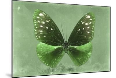 Miss Butterfly Euploea - Green-Philippe Hugonnard-Mounted Photographic Print