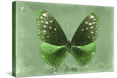 Miss Butterfly Euploea - Green-Philippe Hugonnard-Stretched Canvas Print