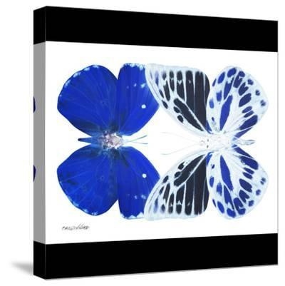 Miss Butterfly Duo Priopomia Sq - X-Ray B&W Edition-Philippe Hugonnard-Stretched Canvas Print