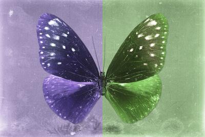 Miss Butterfly Euploea - Purple & Green-Philippe Hugonnard-Framed Photographic Print