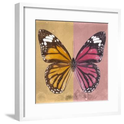 Miss Butterfly Genutia Sq - Honey & Hot Pink-Philippe Hugonnard-Framed Photographic Print