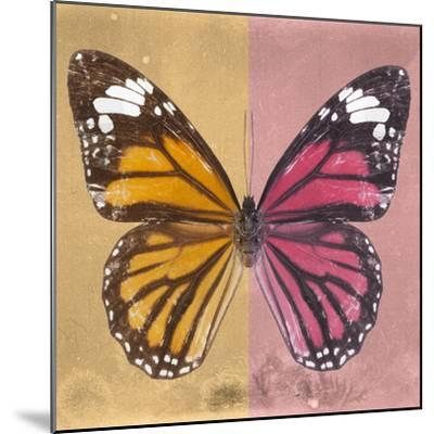 Miss Butterfly Genutia Sq - Honey & Hot Pink-Philippe Hugonnard-Mounted Photographic Print