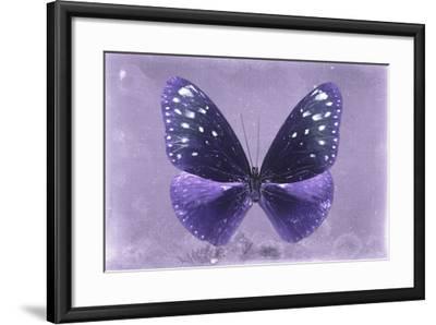 Miss Butterfly Euploea - Purple-Philippe Hugonnard-Framed Photographic Print