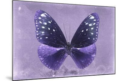 Miss Butterfly Euploea - Purple-Philippe Hugonnard-Mounted Photographic Print