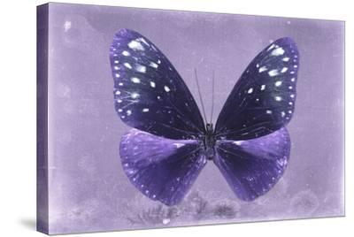 Miss Butterfly Euploea - Purple-Philippe Hugonnard-Stretched Canvas Print