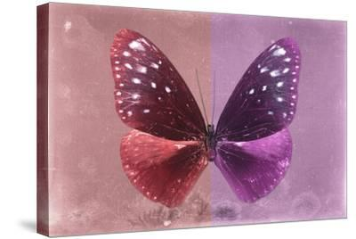 Miss Butterfly Euploea - Red & Hot Pink-Philippe Hugonnard-Stretched Canvas Print
