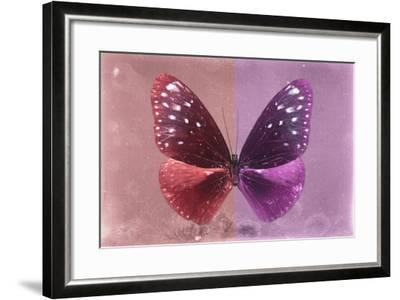 Miss Butterfly Euploea - Red & Hot Pink-Philippe Hugonnard-Framed Photographic Print