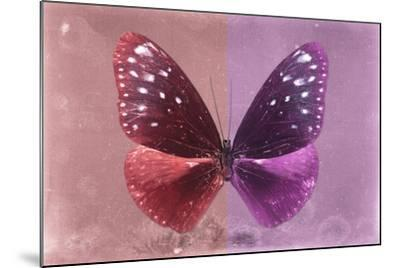 Miss Butterfly Euploea - Red & Hot Pink-Philippe Hugonnard-Mounted Photographic Print
