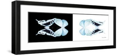 Miss Butterfly Duo Cloanthaea Pan - X-Ray B&W Edition-Philippe Hugonnard-Framed Photographic Print