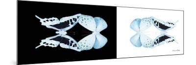 Miss Butterfly Duo Cloanthaea Pan - X-Ray B&W Edition-Philippe Hugonnard-Mounted Photographic Print