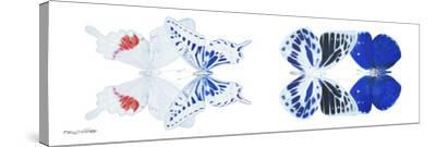 Miss Butterfly X-Ray Duo White Pano V-Philippe Hugonnard-Stretched Canvas Print