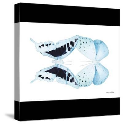 Miss Butterfly Duo Cloanthaea Sq - X-Ray B&W Edition-Philippe Hugonnard-Stretched Canvas Print