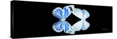 Miss Butterfly Duo Salateuploea Pan - X-Ray Black Edition-Philippe Hugonnard-Stretched Canvas Print