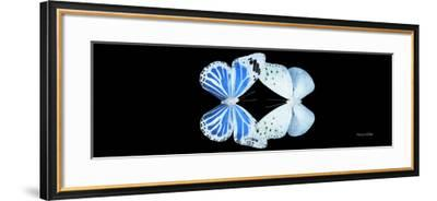 Miss Butterfly Duo Salateuploea Pan - X-Ray Black Edition-Philippe Hugonnard-Framed Photographic Print