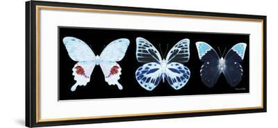 Miss Butterfly X-Ray Panoramic Black II-Philippe Hugonnard-Framed Photographic Print