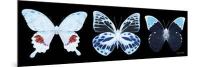 Miss Butterfly X-Ray Panoramic Black II-Philippe Hugonnard-Mounted Photographic Print
