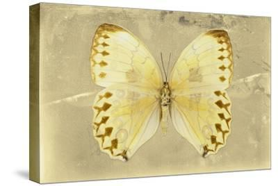 Miss Butterfly Formosana - Yellow-Philippe Hugonnard-Stretched Canvas Print