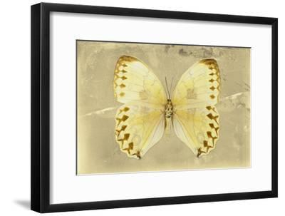 Miss Butterfly Formosana - Yellow-Philippe Hugonnard-Framed Photographic Print